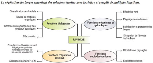 fonctions ripisylve source agence AESN